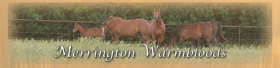 Merrington Warmbloods